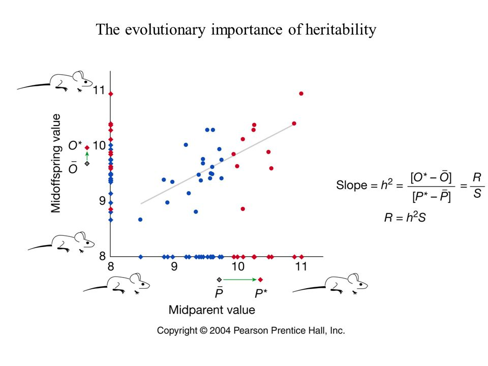 The evolutionary importance of heritability