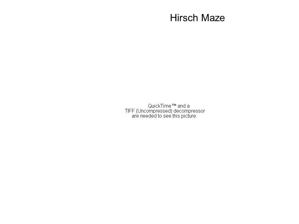 Hirsch Maze