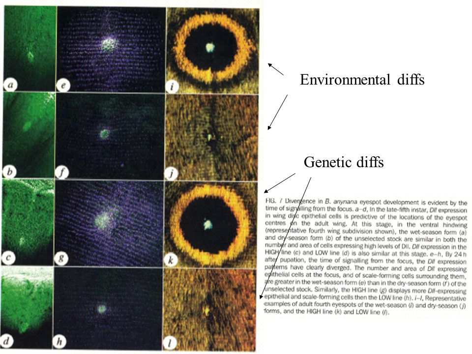 Environmental diffs Genetic diffs