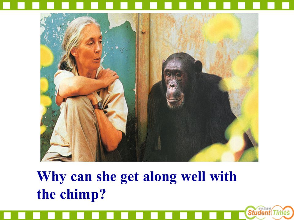 Why can she get along well with the chimp?