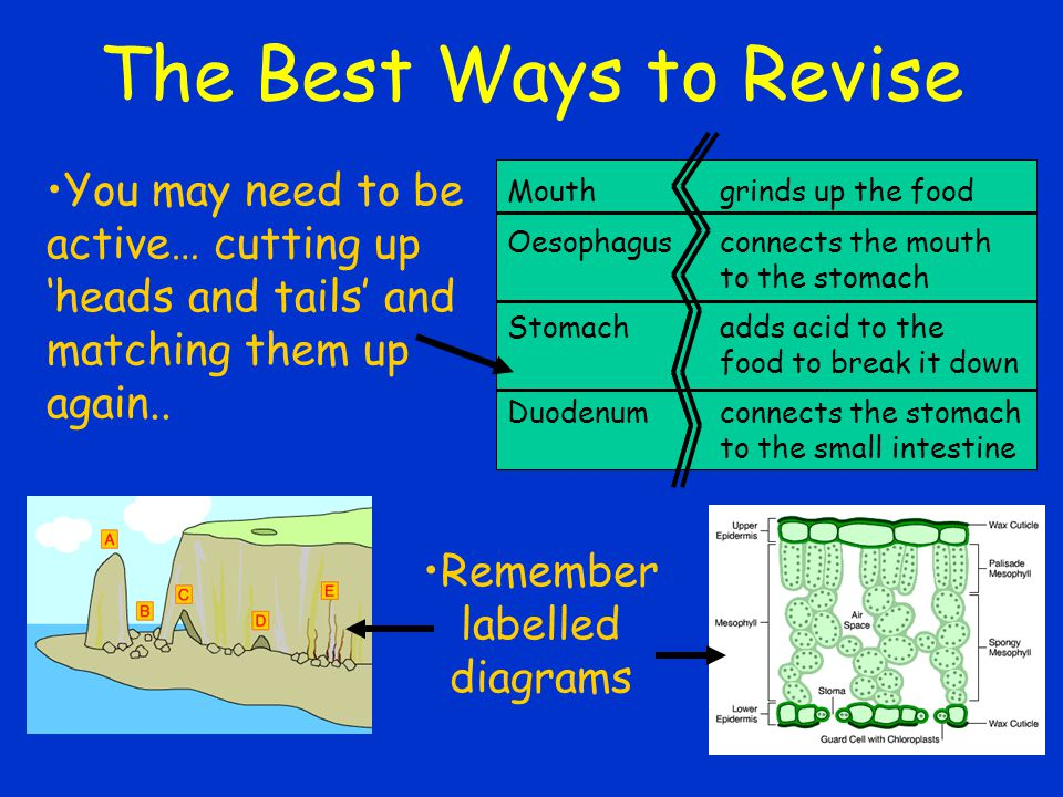 The Best Ways to Revise You may need to be active… cutting up 'heads and tails' and matching them up again..