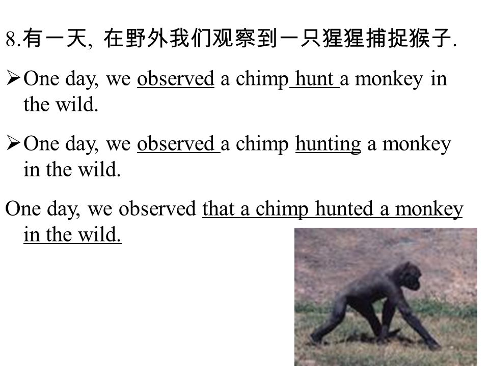 8. 有一天, 在野外我们观察到一只猩猩捕捉猴子.  One day, we observed a chimp hunt a monkey in the wild.