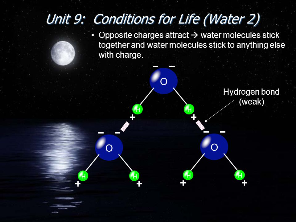 Unit 9: Conditions for Life (Water 2) Opposite charges attract  water molecules stick together and water molecules stick to anything else with charge.