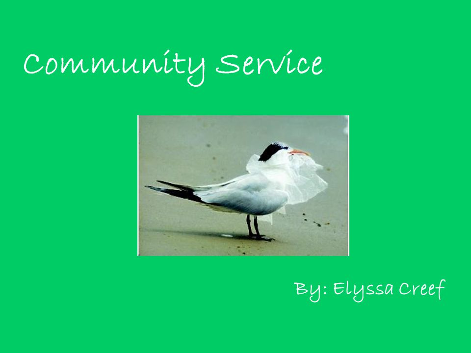 Community Service By: Elyssa Creef