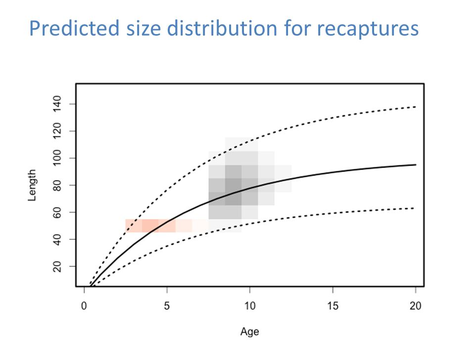 Predicted size distribution for recaptures
