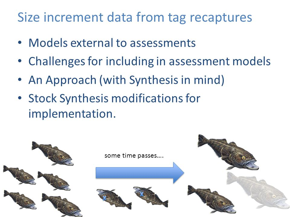Size increment data from tag recaptures Models external to assessments Challenges for including in assessment models An Approach (with Synthesis in mi