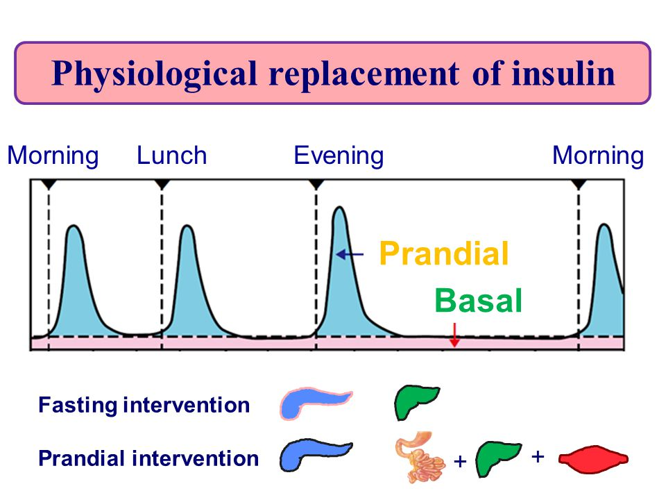 Physiological replacement of insulin + + Fasting intervention Prandial intervention Morning Lunch Evening Morning Basal Prandial