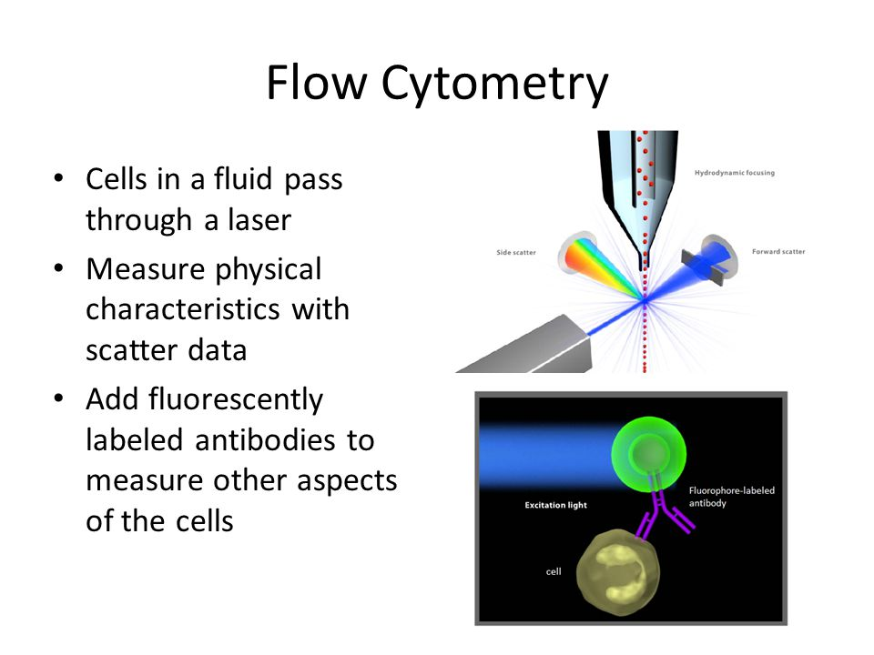 Flow Cytometry Cells in a fluid pass through a laser Measure physical characteristics with scatter data Add fluorescently labeled antibodies to measur