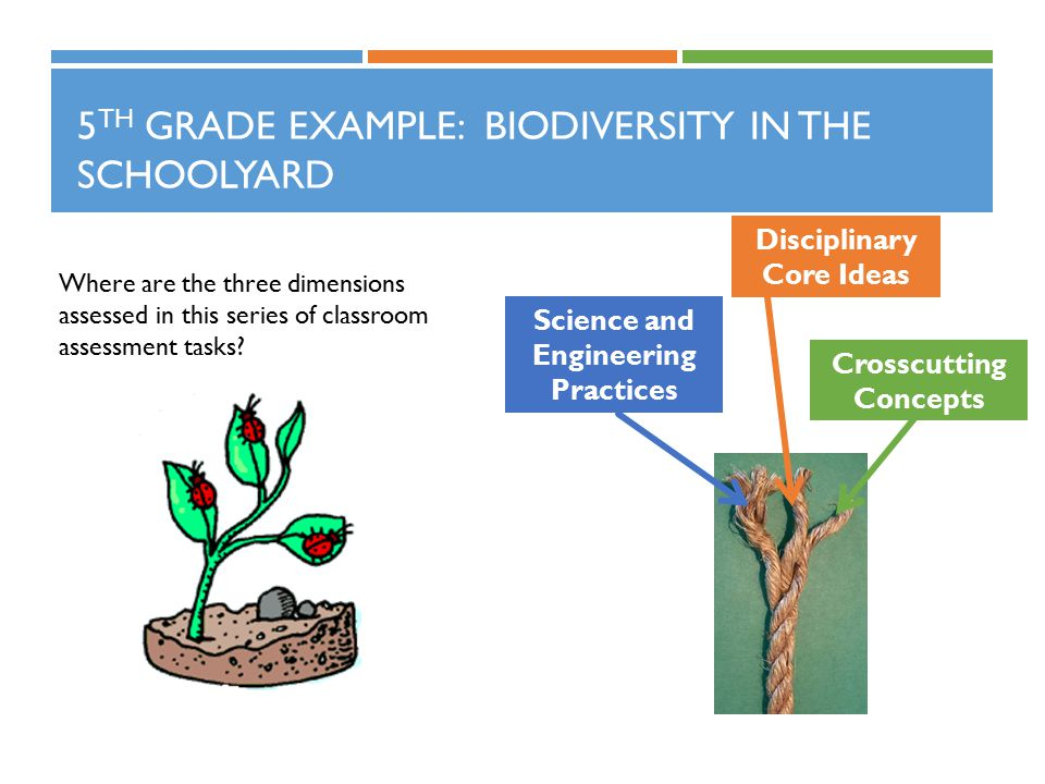 5 TH GRADE EXAMPLE: BIODIVERSITY IN THE SCHOOLYARD Where are the three dimensions assessed in this series of classroom assessment tasks? Science and E