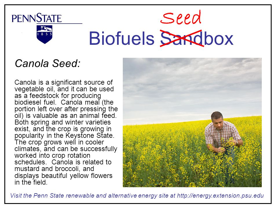 Canola Seed: Canola is a significant source of vegetable oil, and it can be used as a feedstock for producing biodiesel fuel.