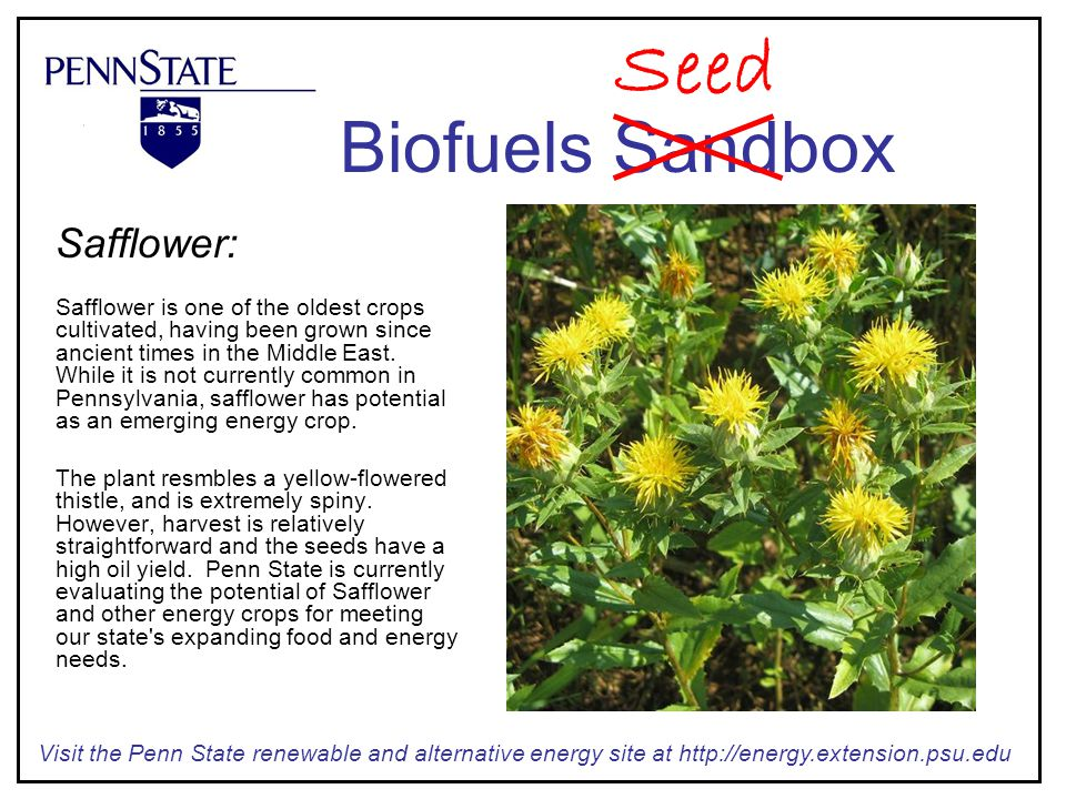 Safflower: Safflower is one of the oldest crops cultivated, having been grown since ancient times in the Middle East.
