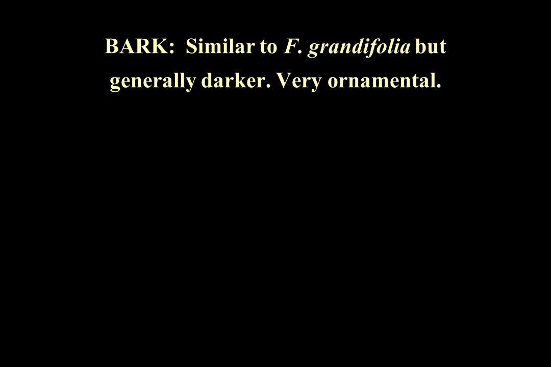 BARK: Similar to F. grandifolia but generally darker. Very ornamental.