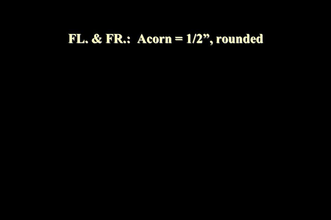 FL. & FR.: Acorn = 1/2 , rounded