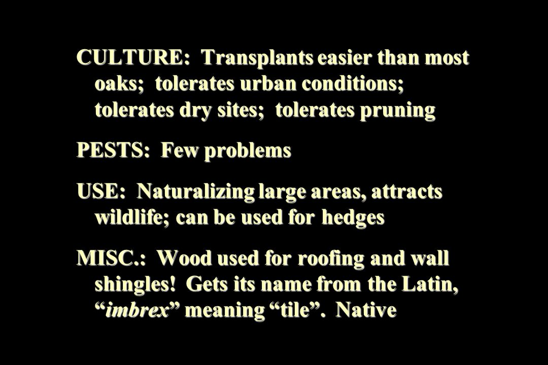 CULTURE: Transplants easier than most oaks; tolerates urban conditions; tolerates dry sites; tolerates pruning PESTS: Few problems USE: Naturalizing large areas, attracts wildlife; can be used for hedges MISC.: Wood used for roofing and wall shingles.