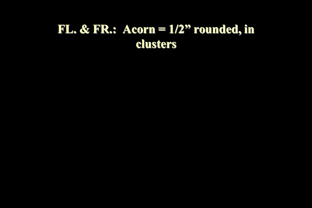 FL. & FR.: Acorn = 1/2 rounded, in clusters