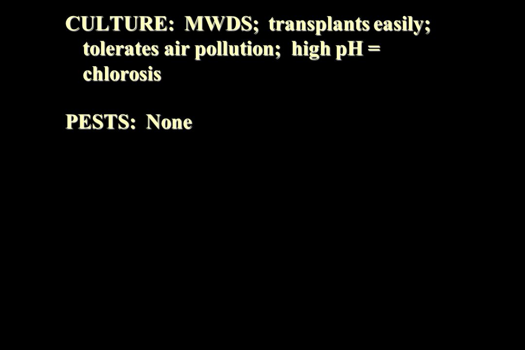 CULTURE: MWDS; transplants easily; tolerates air pollution; high pH = chlorosis PESTS: None