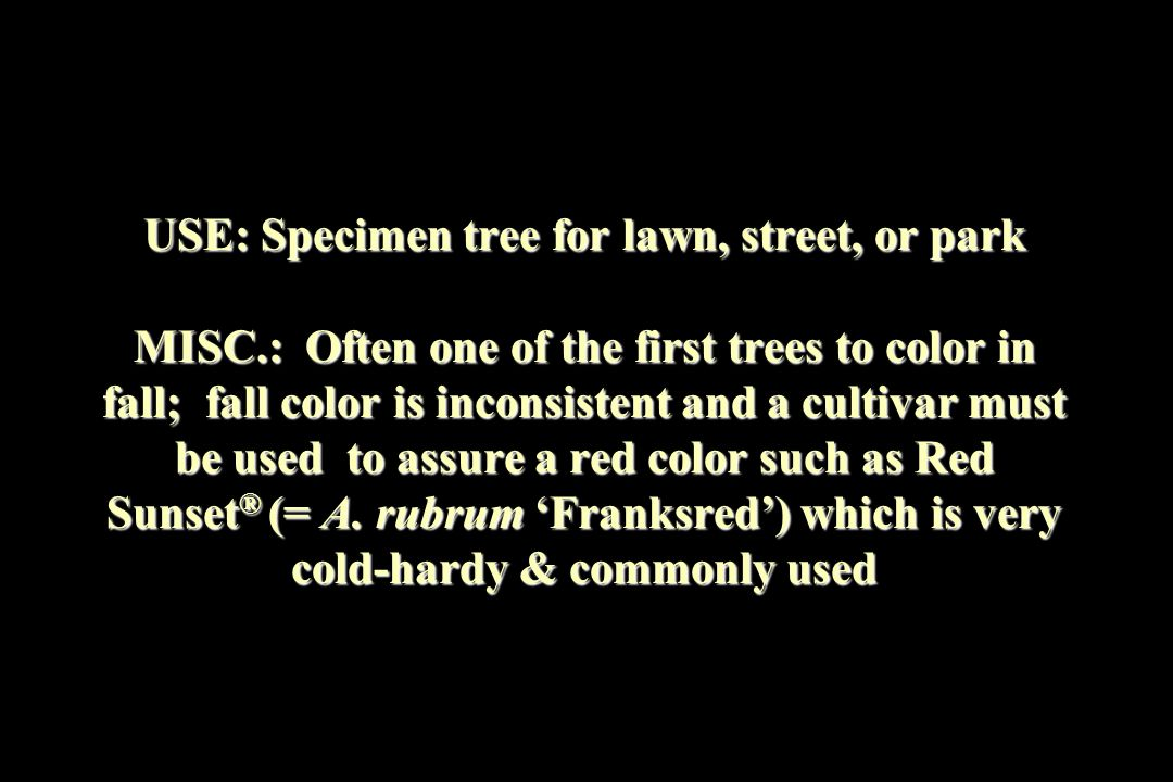 USE: Specimen tree for lawn, street, or park MISC.: Often one of the first trees to color in fall; fall color is inconsistent and a cultivar must be u