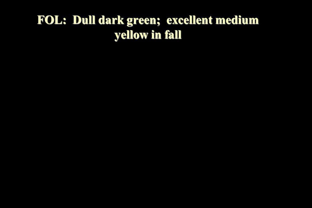 FOL: Dull dark green; excellent medium yellow in fall
