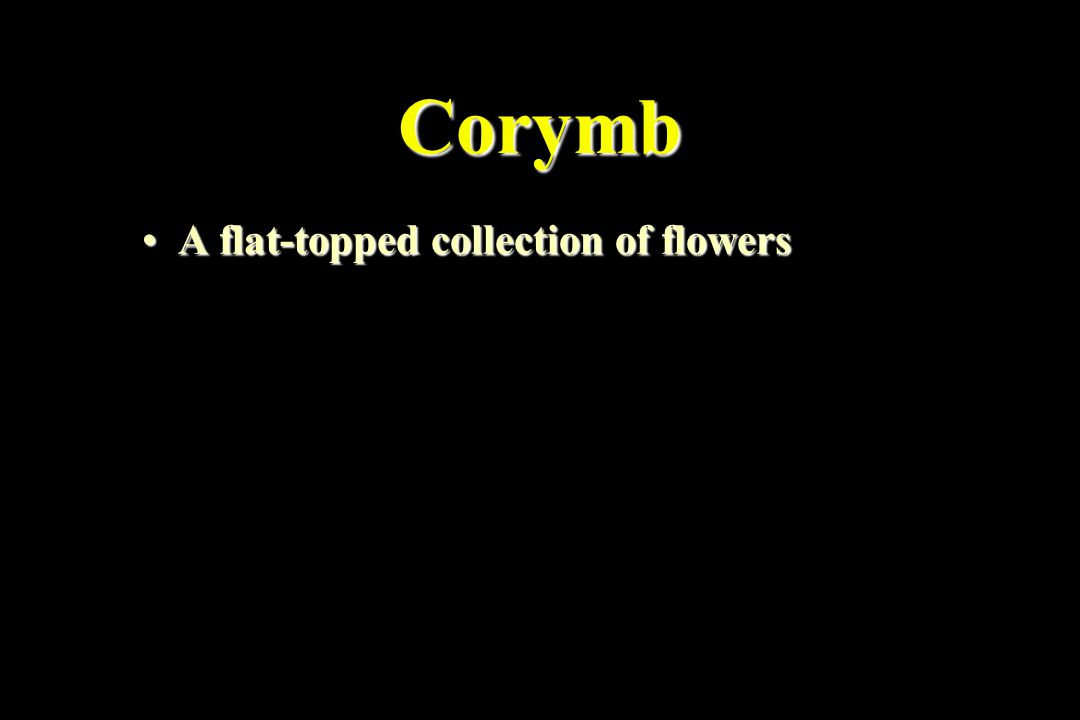 Corymb A flat-topped collection of flowersA flat-topped collection of flowers