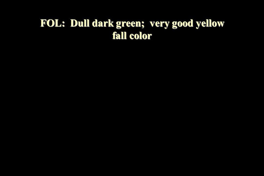 FOL: Dull dark green; very good yellow fall color