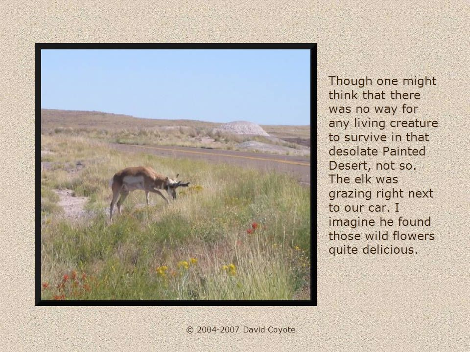 © 2004-2007 David Coyote Though one might think that there was no way for any living creature to survive in that desolate Painted Desert, not so.