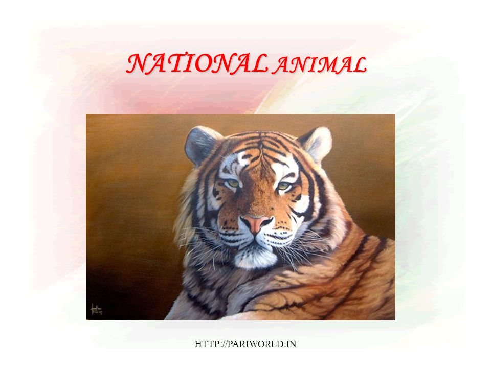 NATIONAL ANIMAL HTTP://PARIWORLD.IN