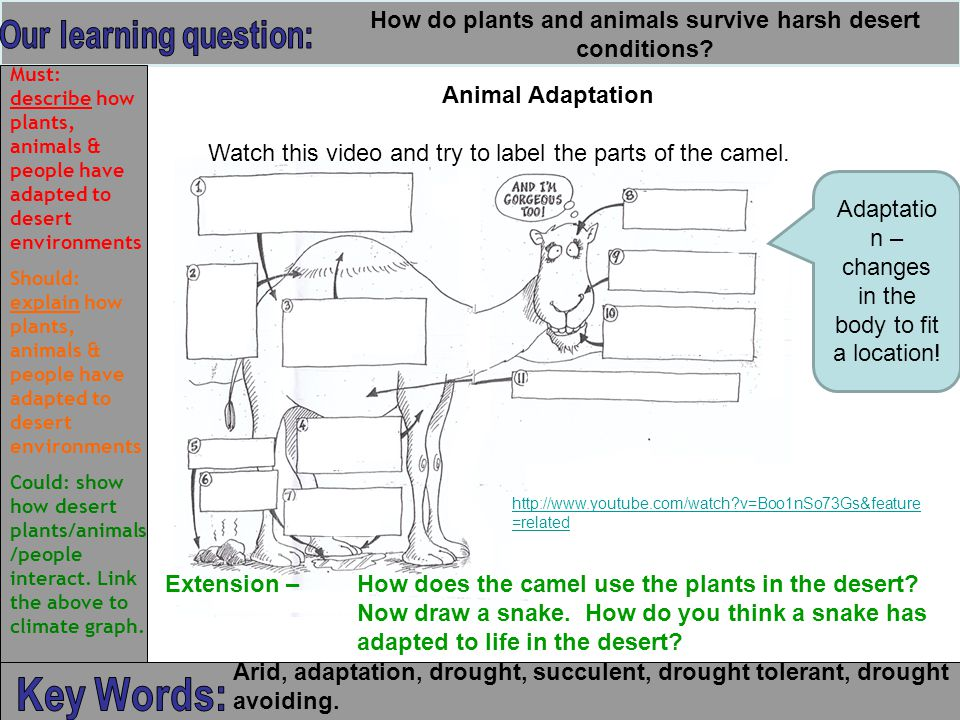 http://www.youtube.com/watch?v=Boo1nSo73Gs&feature =related Adaptatio n – changes in the body to fit a location! How do plants and animals survive har
