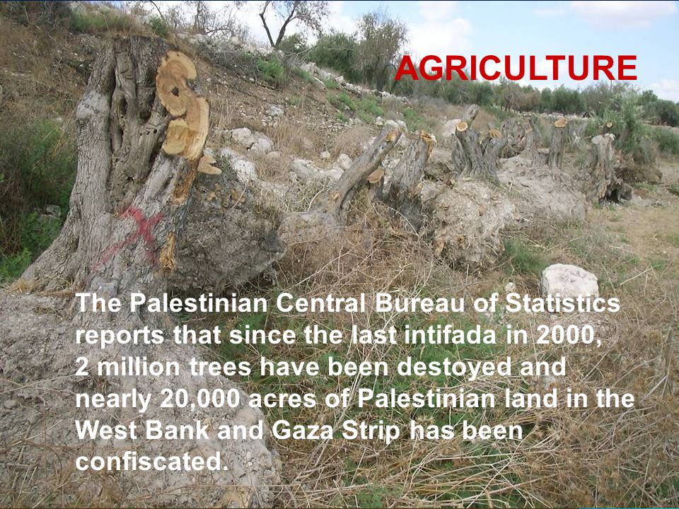 AGRICULTURE The Palestinian Central Bureau of Statistics reports that since the last intifada in 2000, 2 million trees have been destoyed and nearly 2