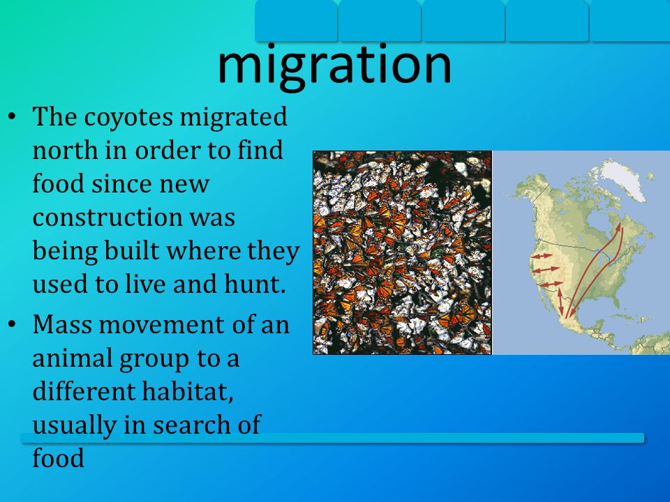 migration The coyotes migrated north in order to find food since new construction was being built where they used to live and hunt.