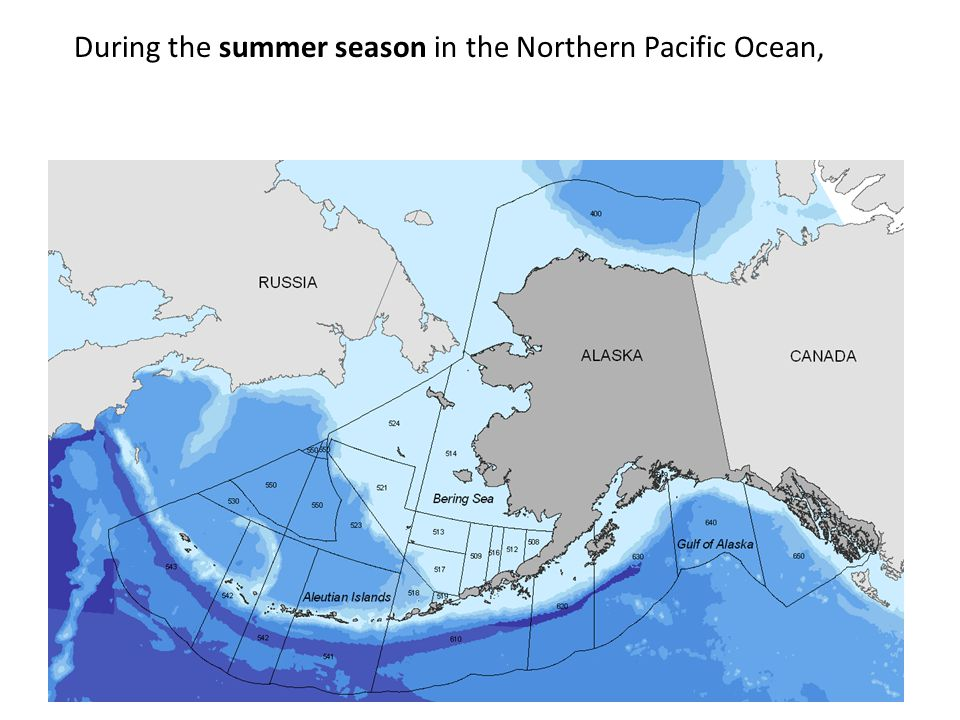During the summer season in the Northern Pacific Ocean,