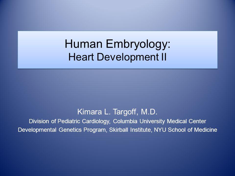 Human Embryology: Heart Development II Kimara L. Targoff, M.D.