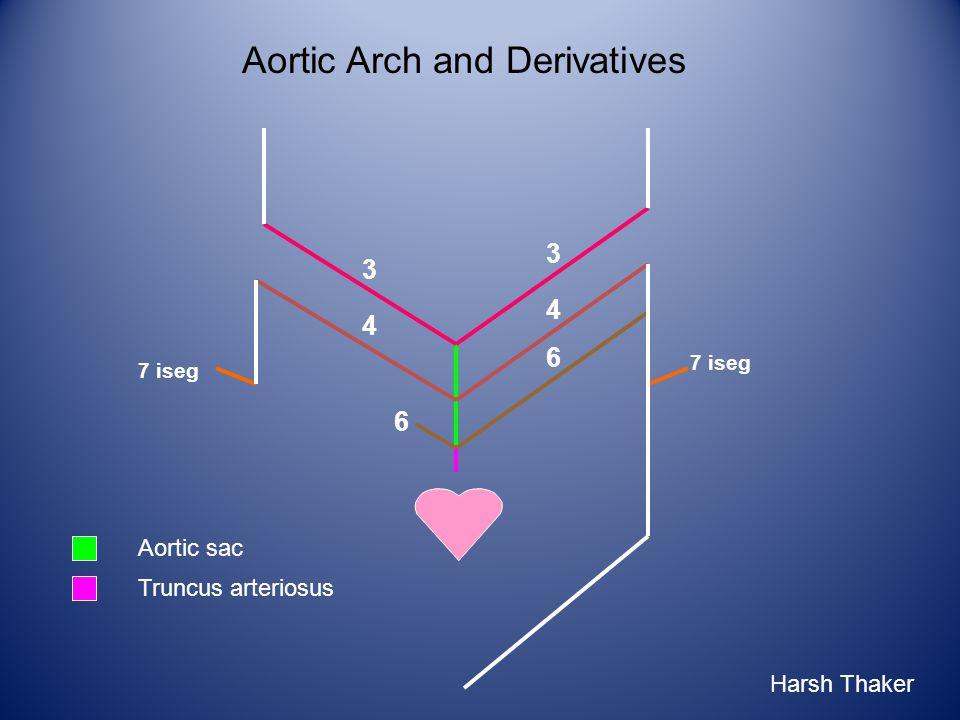 6 3 3 4 4 7 iseg Aortic sac Truncus arteriosus 6 Aortic Arch and Derivatives Harsh Thaker