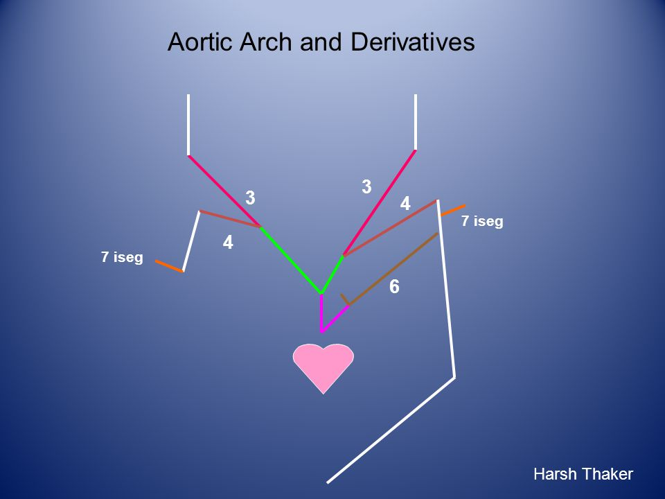 6 3 3 4 4 7 iseg Aortic Arch and Derivatives Harsh Thaker