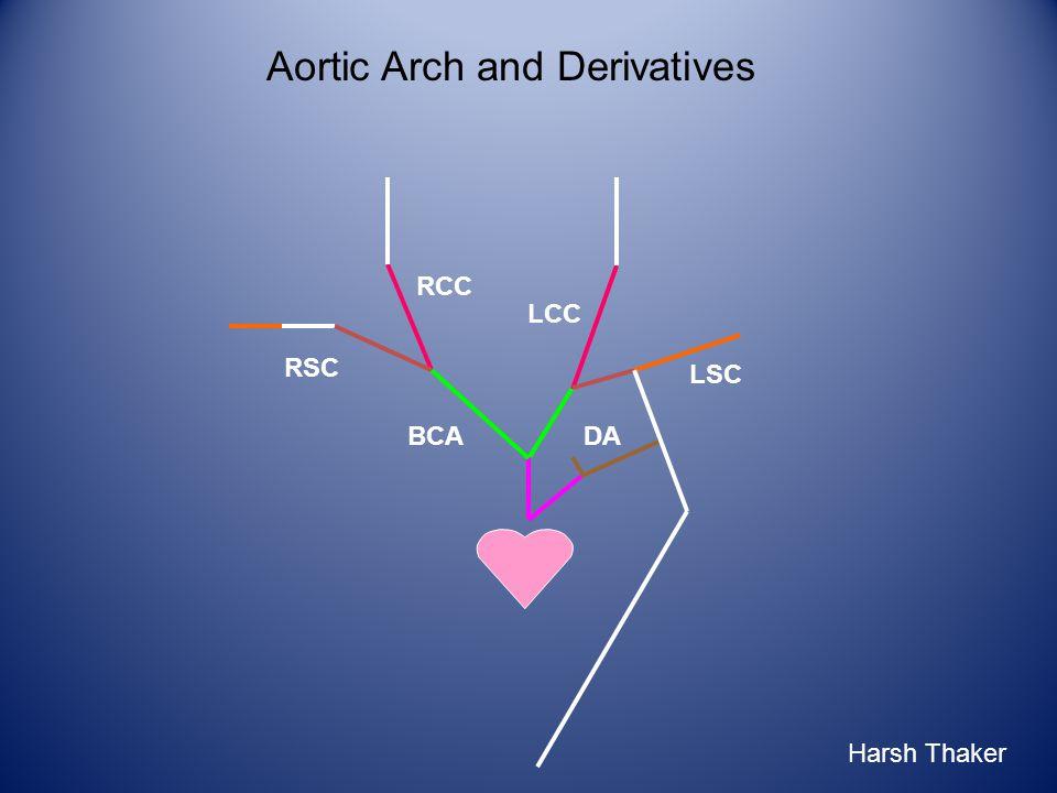 LCC RCC RSC BCA LSC DA Aortic Arch and Derivatives Harsh Thaker