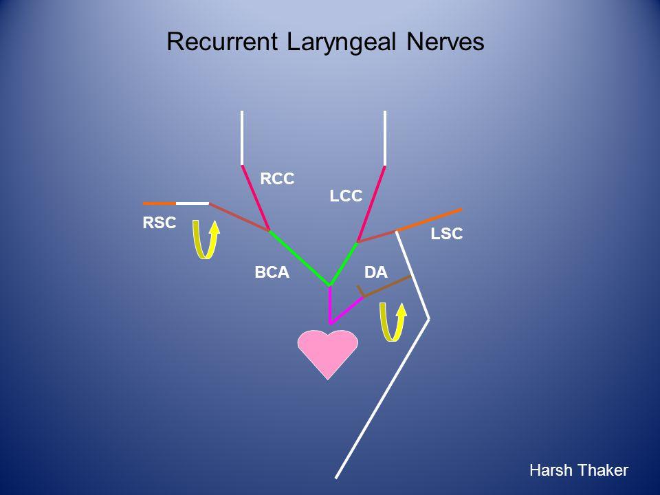 LCC RCC RSC BCA LSC DA Recurrent Laryngeal Nerves Harsh Thaker