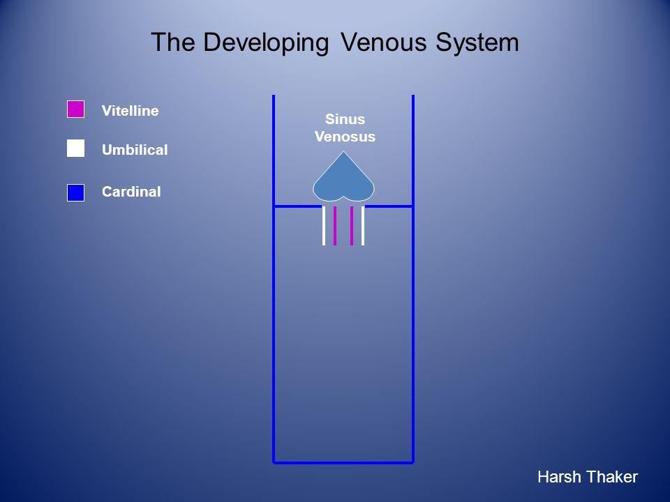 Umbilical Vitelline The Developing Venous System Sinus Venosus Cardinal Harsh Thaker