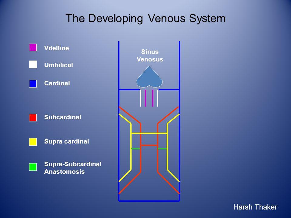 Umbilical Vitelline The Developing Venous System Sinus Venosus Cardinal Harsh Thaker Subcardinal Supra cardinal Supra-Subcardinal Anastomosis