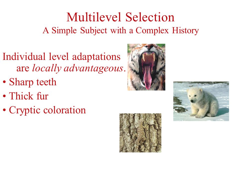 Multilevel Selection A Simple Subject with a Complex History Individual level adaptations are locally advantageous.