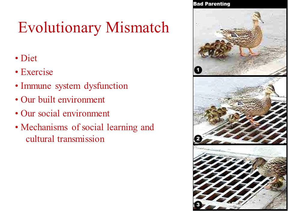 Evolutionary Mismatch Diet Exercise Immune system dysfunction Our built environment Our social environment Mechanisms of social learning and cultural transmission