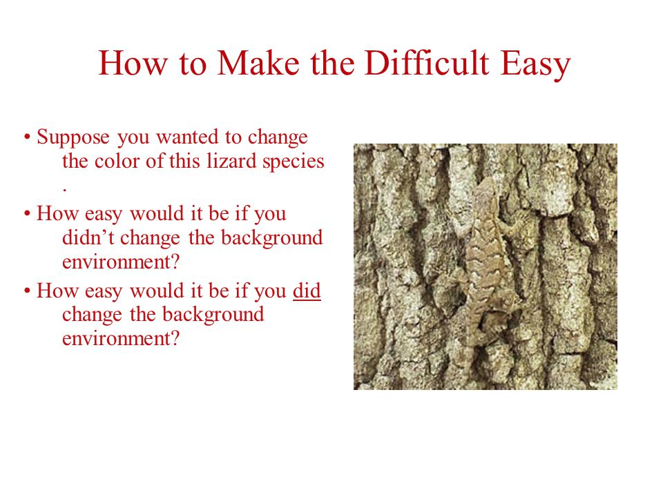 How to Make the Difficult Easy Suppose you wanted to change the color of this lizard species.