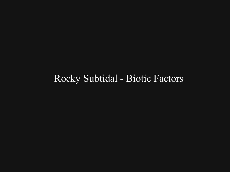Rocky Subtidal - Biotic Factors
