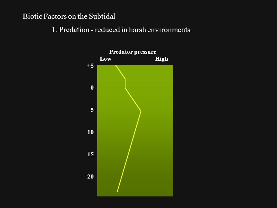 Biotic Factors on the Subtidal 1.
