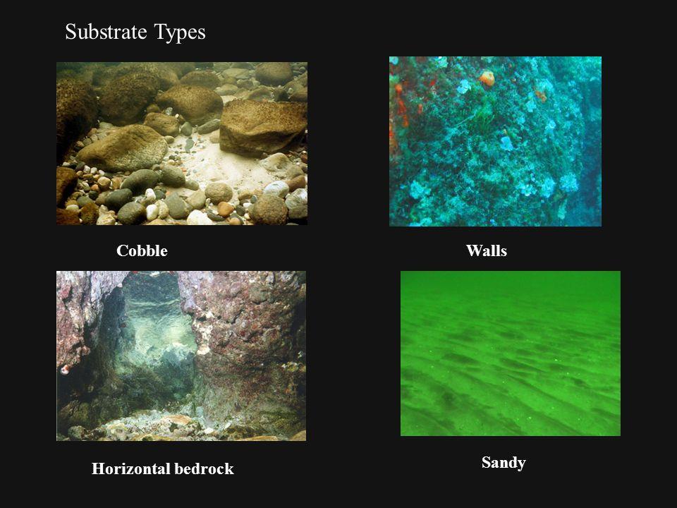 Substrate Types CobbleWalls Horizontal bedrock Sandy