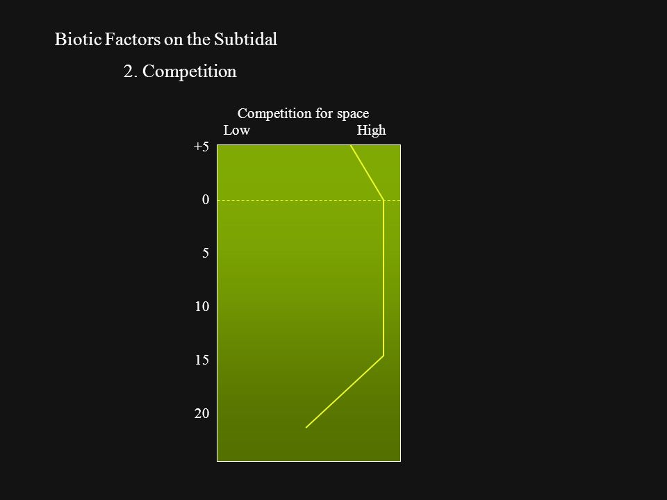 Biotic Factors on the Subtidal 2. Competition +5 0 5 10 15 20 LowHigh Competition for space