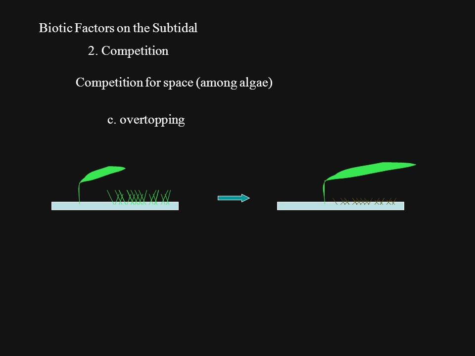 Biotic Factors on the Subtidal 2. Competition Competition for space (among algae) c. overtopping