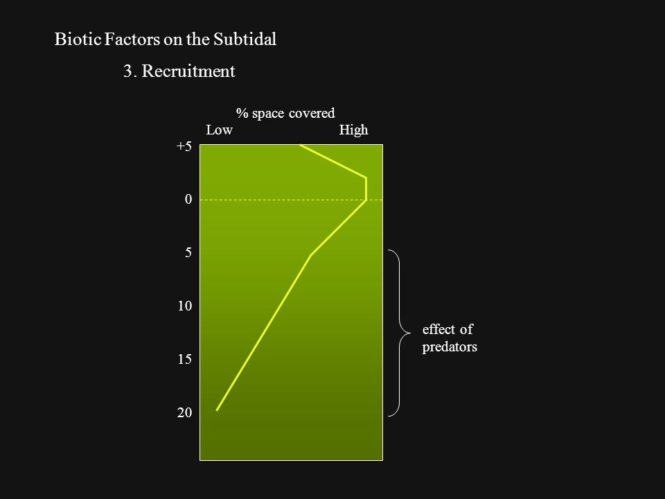 Biotic Factors on the Subtidal 3.