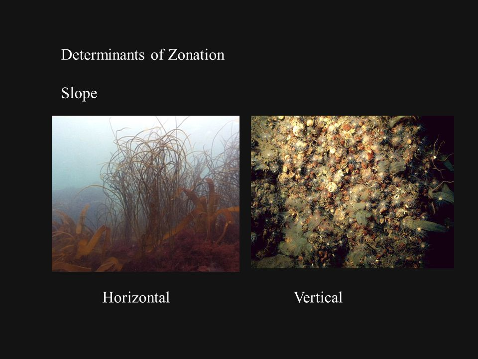 Determinants of Zonation Slope HorizontalVertical