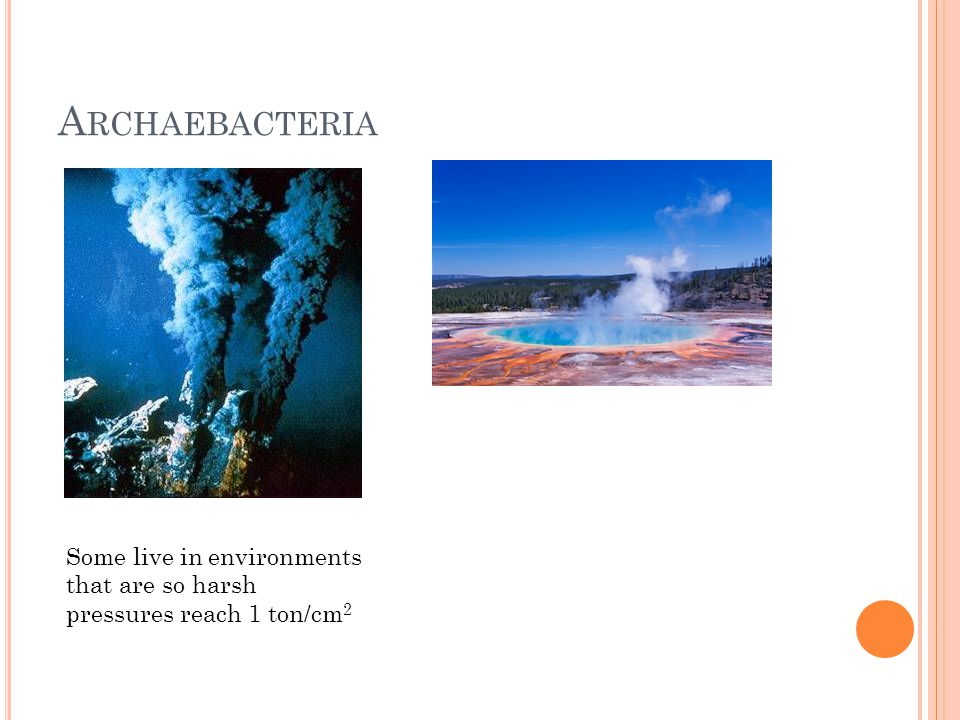 E UBACTERIA Major Characteristics Differ from archaebacteria by chemical composition Are vital in recycling nutrients Grow in all environments, from guts of animals to soil and radioactive waste Cell Type: prokaryotes Cell Structure: variety of cell shapes: sperical, rodlike, spiral; few if any internal organelles, some have external flagella Body Plan: unicellular