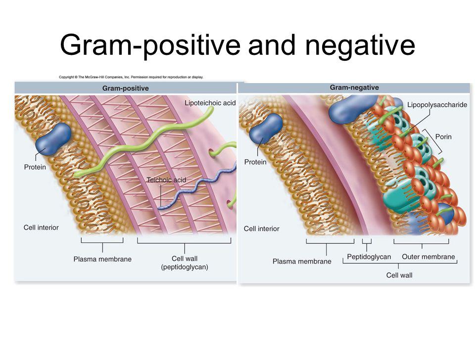 Gram-positive and negative