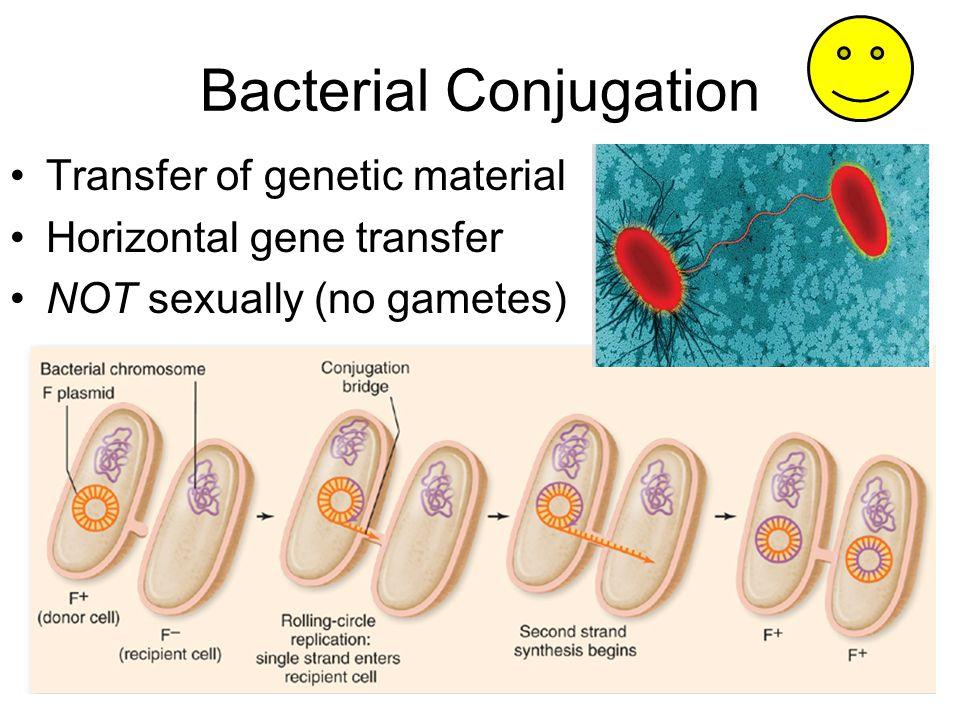 Bacterial Conjugation Transfer of genetic material Horizontal gene transfer NOT sexually (no gametes)